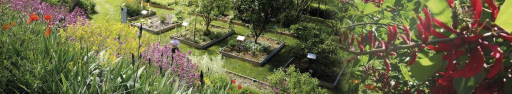 jardin couleur garance